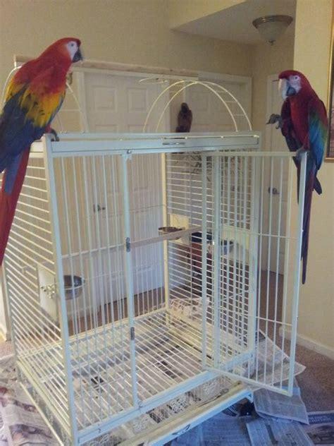 bird cages  parrots bird cages