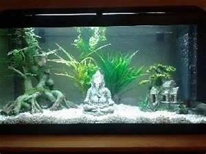 Deco Aquarium Zen : nouveau et nouvel aquarium 96l forum aquarium ~ Melissatoandfro.com Idées de Décoration
