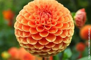 Welche Blumen Blühen Im August : archiv f r den monat juni 2013 blumenbibel ~ Orissabook.com Haus und Dekorationen