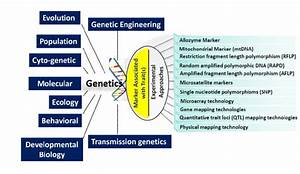 A Schematic Diagram Shows The Links Of Genetics And
