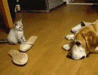 Cat Dog GIF - Find & Share on GIPHY