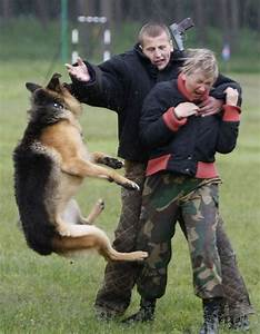 border guard dog training in ukrain With guard dog training