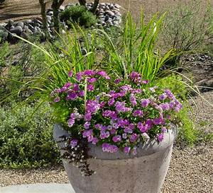 Unusual Plant Containers - Ramblings from a Desert Garden