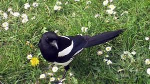 Elster Vogel Vertreiben : feuerwehr rettet vogel aus einem kamin zueriost ~ Lizthompson.info Haus und Dekorationen