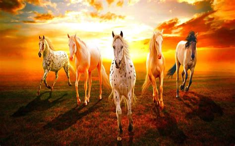 7 Horse Hd Wallpapers 1920x1080 Download