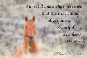 beautiful horse quotes