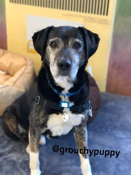 Great Reasons Why Senior Dogs Rule And Puppies Drool