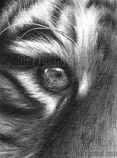 drawing realistic tiger  pencil eyes drawing