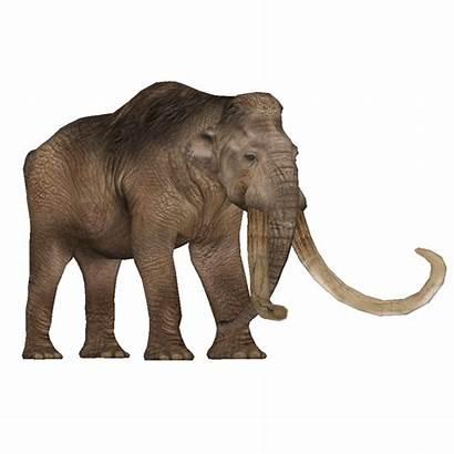 Mammoth Columbian Animals Maximilian Holocene Zt2 Wiki
