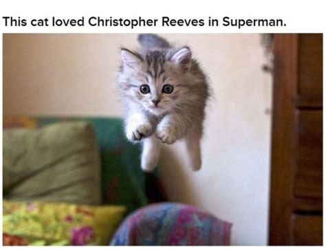 funny cats     characters  pics