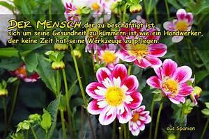 Bild Mit Spruch : der mensch und seine gesundheit ~ Markanthonyermac.com Haus und Dekorationen