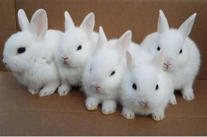 Rabbit Rabbits Bunny Wallpapers Bunnies Eyes Birth