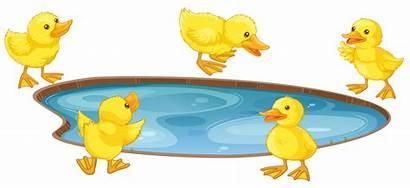 Ducks Pond Five Clipart Around Duck Clip