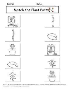 image result  types  plants worksheets