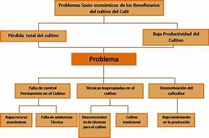 Agroproyecto  Arbol Del Problema