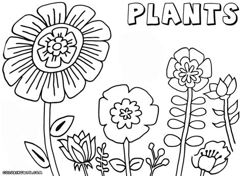 plant coloring pages plant with roots coloring page coloring pages