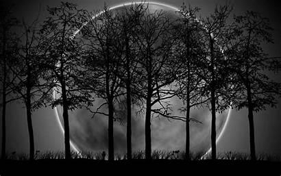 Forest Dark Moon Pixelstalk