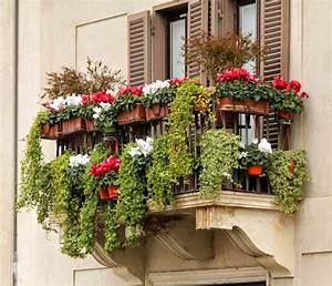 Green, And, Flower, Plants, For, Balconies, And, Terraces, In, Winter