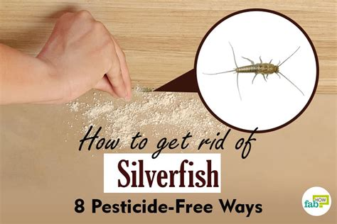 How To Get Rid Of Fishmoths In Cupboards by How To Get Rid Of Silverfish 8 Pesticide Free Ways Fab How