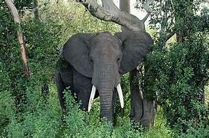 Beautiful dangerous wild animals pets of Africa: Beautiful ...