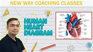 How To Draw Human Heart Diagram