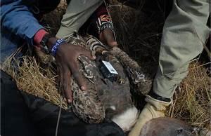 Wildlife Disease News Digest: December 2010
