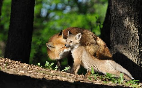 Beautiful Animal Pictures Wallpaper - beautiful nature and animal wallpaper 50 images