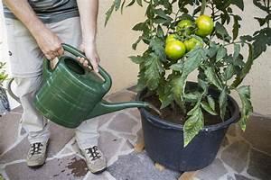 Große Winterharte Kübelpflanzen : 156 besten k belpflanzen bilder auf pinterest ~ Michelbontemps.com Haus und Dekorationen