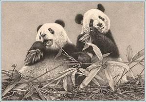 'Bamboo Breakfast' - Panda Bears - Fine Art Pencil Drawing ...