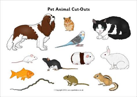 pet animal cut outs sparklebox sort