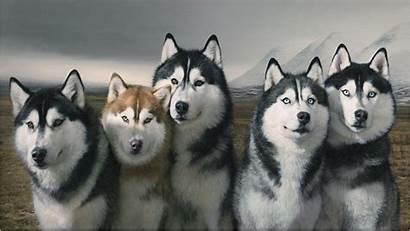 Husky Siberian Wallpapers Puppies