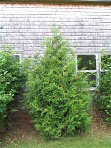 business  building decks  fences red cedar