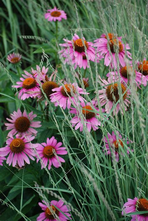 17 Best Images About Native Plants At Warrennewport