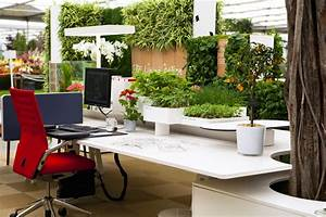 The Importance of Plants in Your Office - MyeOffice