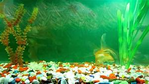 Image Gallery moving fish tank backgrounds