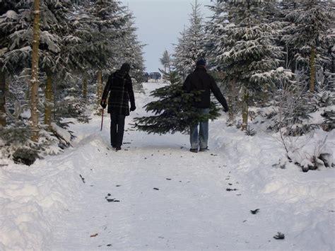 weihnachtsbaum selbst schlagen in kunow 2014 reiseziel