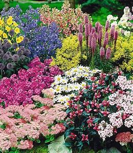 Pflanzen Günstig Kaufen : staudenbeet gartenfreude 15 pflanzen g nstig online kaufen mein sch ner garten shop ~ A.2002-acura-tl-radio.info Haus und Dekorationen