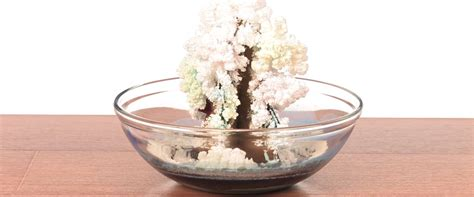 magic crystal tree sick science science experiments