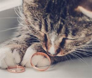 pets at weddings how to include your animal friend in With cat wedding ring