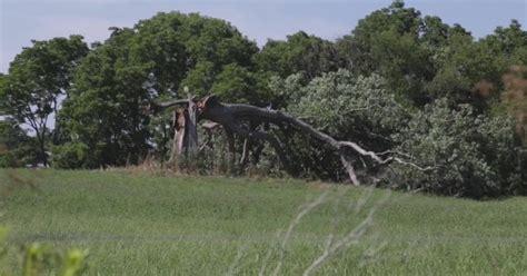 shawshank redemption oak tree knocked   strong
