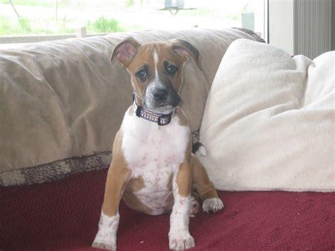 dog breeds that dont shed dog training home dog types