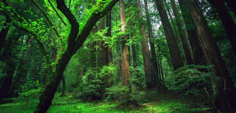 jeux de la jungle cuisine la forêt amazonienne dépend du