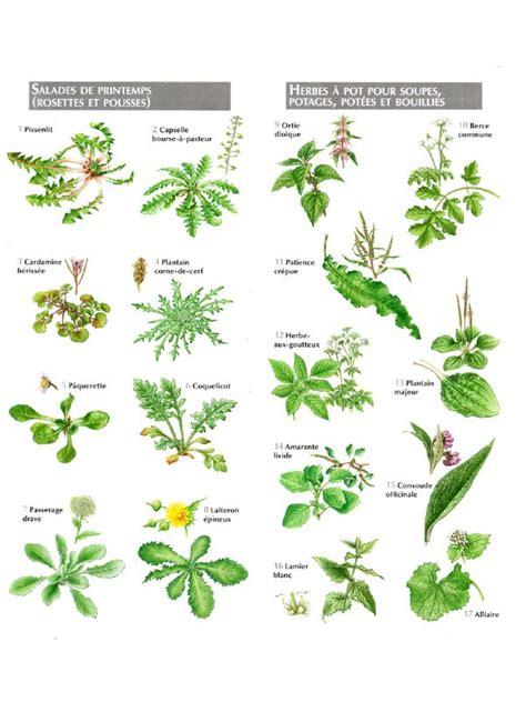 cuisine plantes sauvages comestibles les 25 meilleures idées concernant fleurs comestibles sur