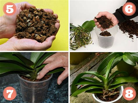 comment soigner les orchidees en pot 28 images rempoter une orchid 233 e techniques et