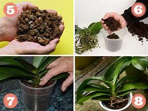 Rempoter Une Orchidee : rempoter une orchid e techniques et conseils ~ Mglfilm.com Idées de Décoration
