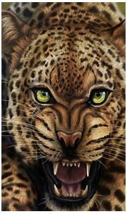 Free download Cool Animal Wallpapers the best 62 images in ...