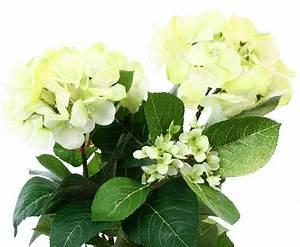Getrocknete Blüten Kaufen : k nstliche hortensien mit lemon farbigen bl ten hier kaufen ~ Orissabook.com Haus und Dekorationen