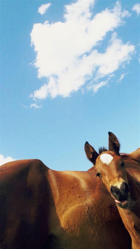 calming horses signals horse