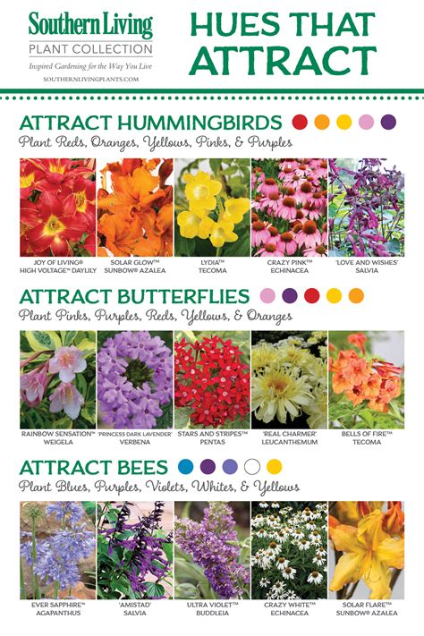 birds bees and butterflies oh my attracting pollinators