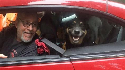 dog  chasing  pickup truck  abandoned